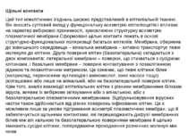 Щільні контакти Цей тип міжклітинних з'єднань широко представлений в епітеліа...