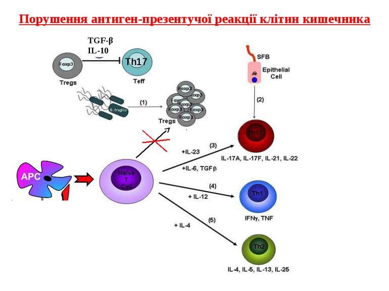 Порушення антиген-презентучої реакції клітин кишечника TGF-β IL-10 Th17