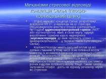 Механізми стресової відповіді: концепція Сельє (гіпофіз-кортикальний шлях) Зг...