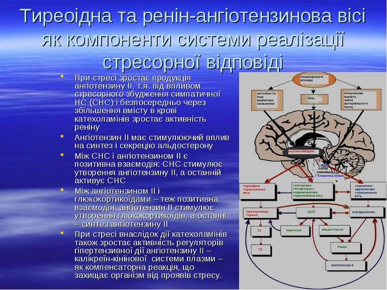 Тиреоідна та ренін-ангіотензинова вісі як компоненти системи реалізації стрес...