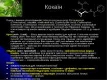 Кокаїн Поряд з іншими алкалоїдами міститься в рослинах роду Ерітроксилум (Ery...