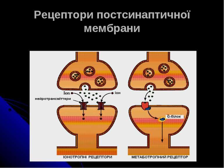 Рецептори постсинаптичної мембрани