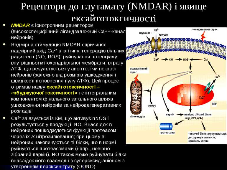 Рецептори до глутамату (NMDAR) і явище ексайтотоксичності NMDAR є іонотропним...