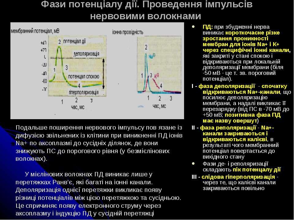 Фази потенціалу дії. Проведення імпульсів нервовими волокнами ПД: при збуджен...