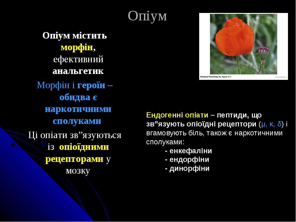 Опіум Опіум містить морфін, ефективний анальгетик Морфін і героїн – обидва є ...