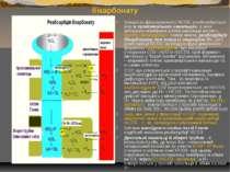 Сечоутворення: особливості реабсорбції бікарбонату Більшість фільтрованого НС...