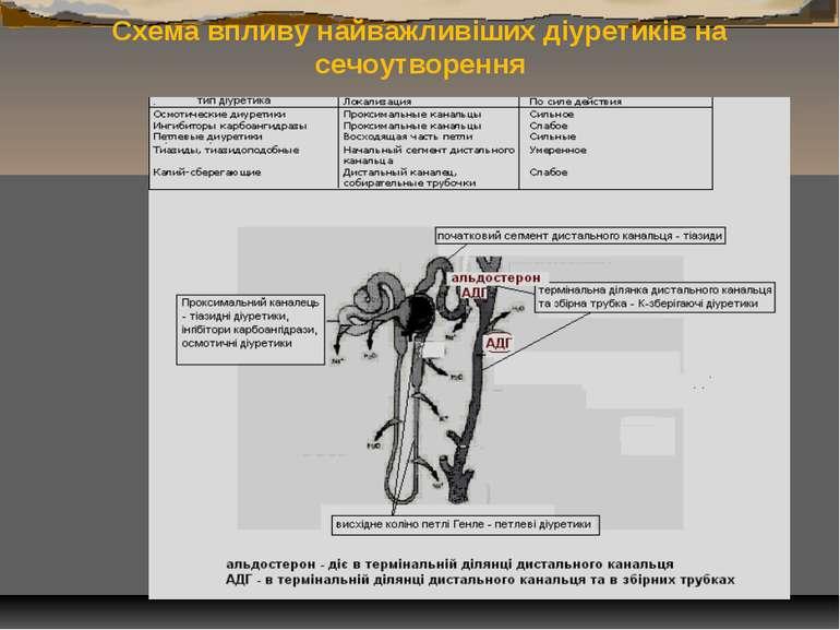 Схема впливу найважливіших діуретиків на сечоутворення