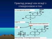 Приклад реакції кон югації з глюкуроновою к-тою