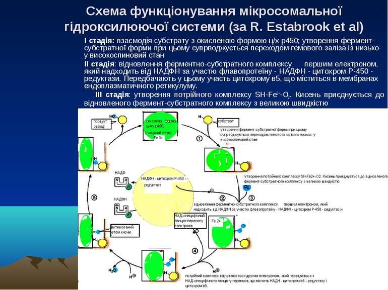 Схема функціонування мікросомальної гідроксилюючої системи (за R. Estabrook e...