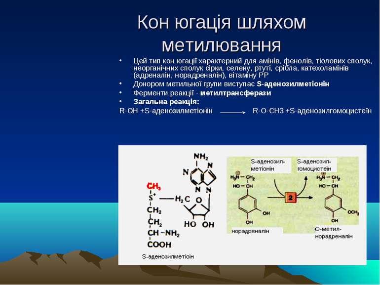 Кон югація шляхом метилювання Цей тип кон югації характерний для амінів, фено...