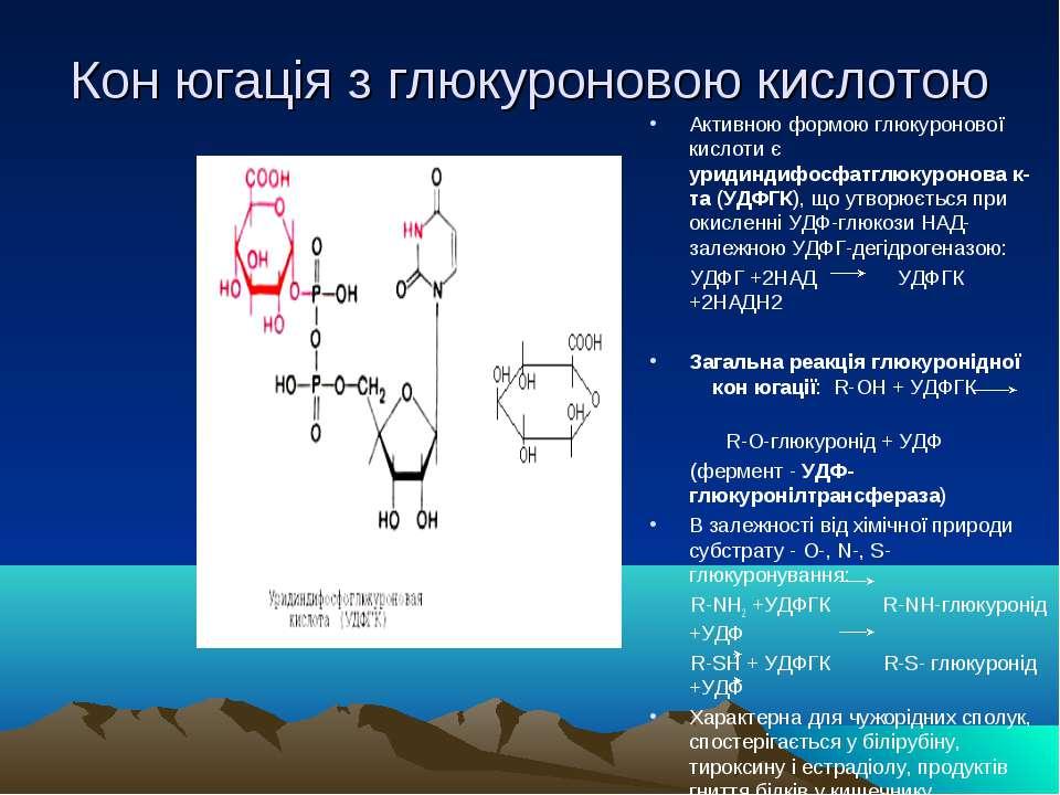 Кон югація з глюкуроновою кислотою Активною формою глюкуронової кислоти є ури...