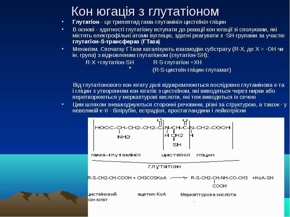 Кон югація з глутатіоном Глутатіон - це трипептид гама-глутамініл-цистеїніл-г...