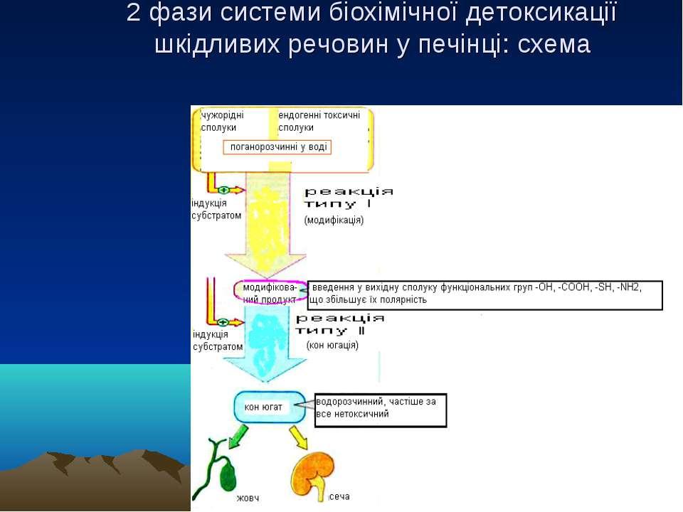 2 фази системи біохімічної детоксикації шкідливих речовин у печінці: схема