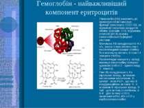 Гемоглобін - найважливіший компонент еритроцитів Гемоглобін (Hb) належить до ...