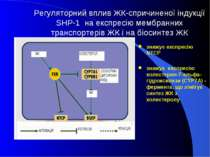Регуляторний вплив ЖК-спричиненої індукції SHP-1 на експресію мембранних тран...