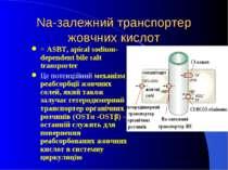 Na-залежний транспортер жовчних кислот = ASBT, apical sodium-dependent bile s...