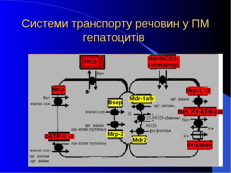 Системи транспорту речовин у ПМ гепатоцитів