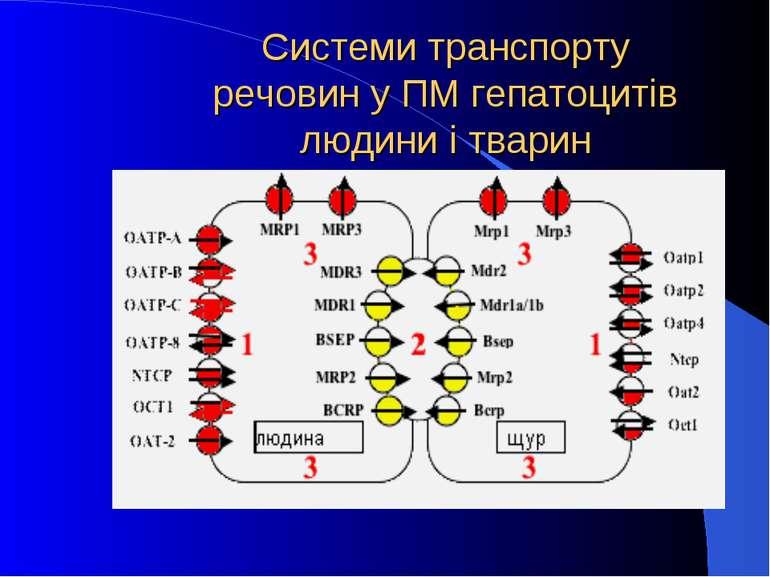 Системи транспорту речовин у ПМ гепатоцитів людини і тварин