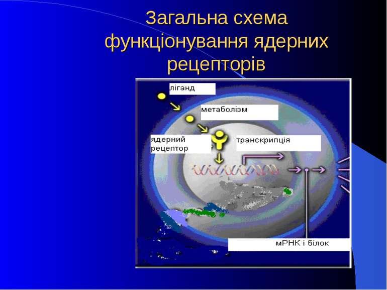 Загальна схема функціонування ядерних рецепторів