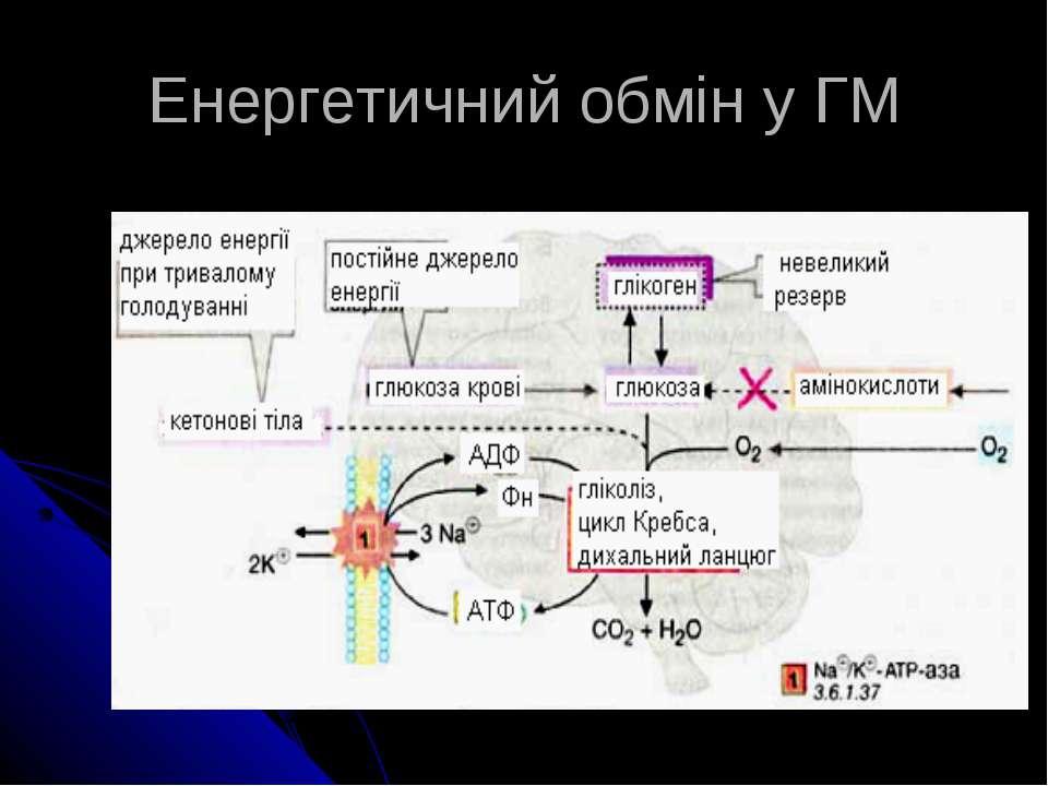Енергетичний обмін у ГМ