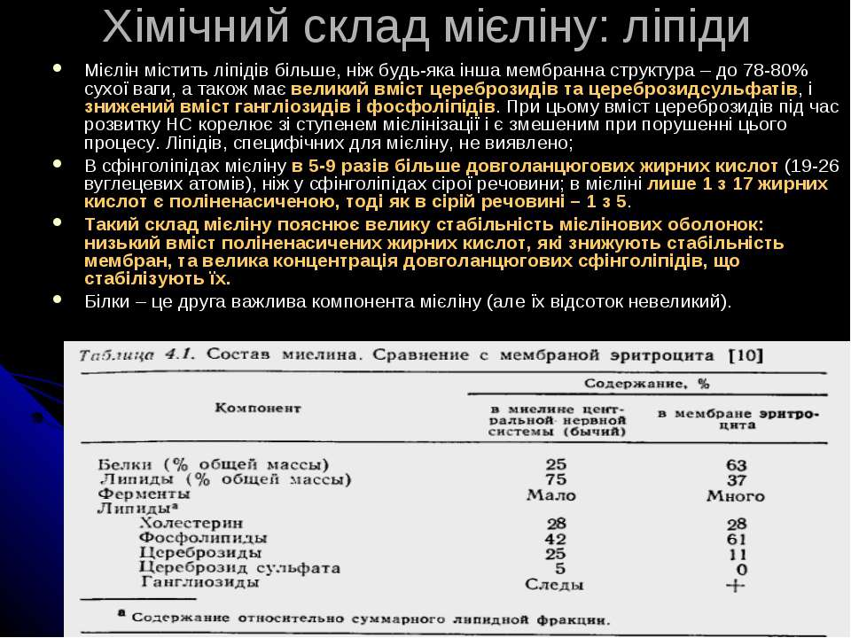 Хімічний склад мієліну: ліпіди Мієлін містить ліпідів більше, ніж будь-яка ін...