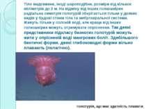 Тіло видовжене, іноді шароподібне, розміри від кількох міліметрів до 2 м. На ...