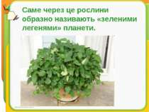 Саме через це рослини образно називають «зеленими легенями» планети.