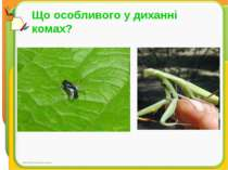 Що особливого у диханні комах?