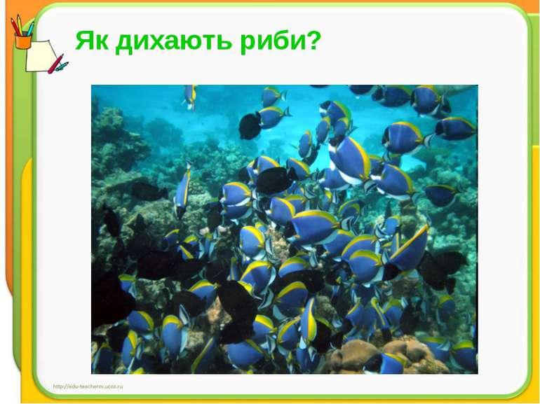 Як дихають риби?