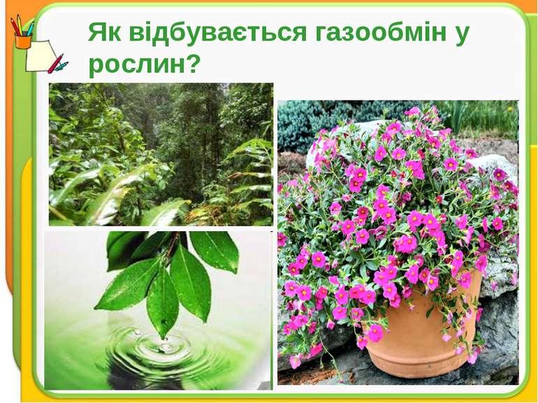 Як відбувається газообмін у рослин?