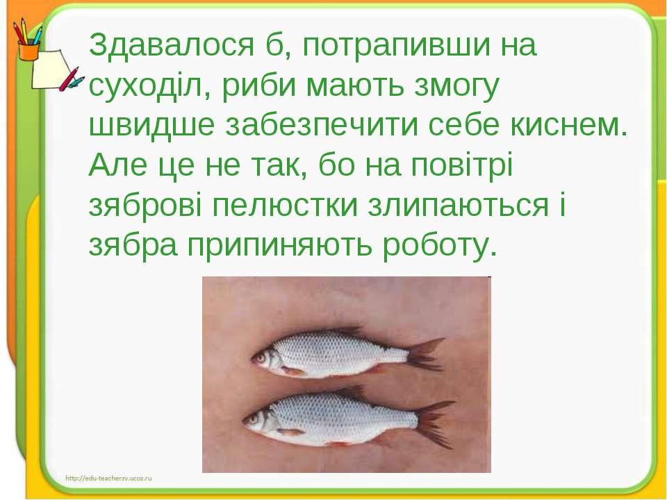 Здавалося б, потрапивши на суходіл, риби мають змогу швидше забезпечити себе ...