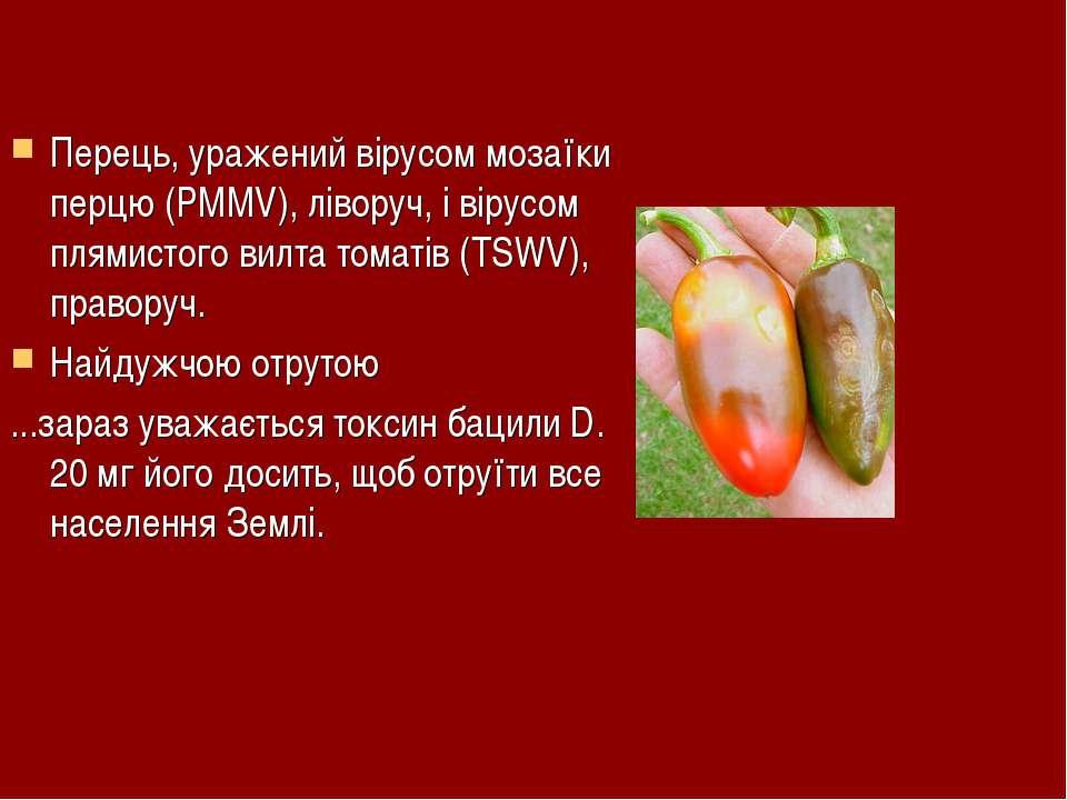Перець, уражений вірусом мозаїки перцю (PMMV), ліворуч, і вірусом плямистого ...