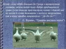 Білий гусак підбіг близько до Гриця з витягнутою головою, немов хотів йому до...