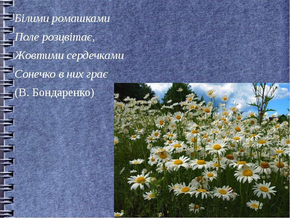 Білими ромашками Поле розцвітає, Жовтими сердечками Сонечко в них грає (В. Бо...