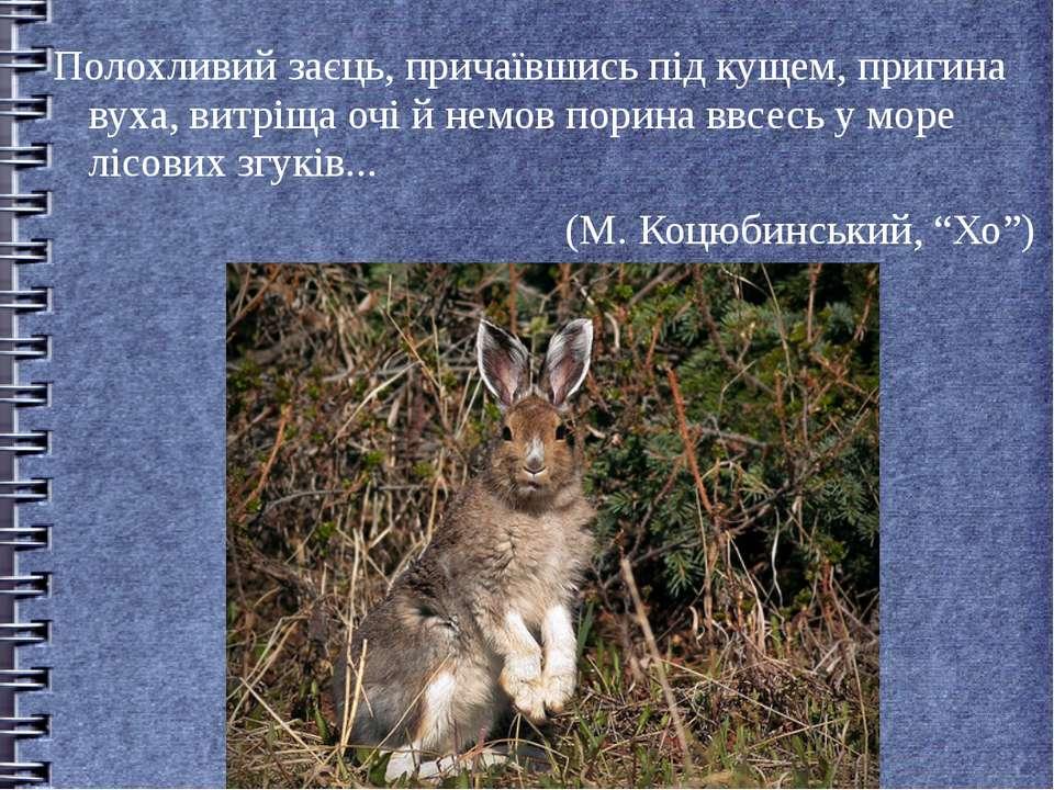 Полохливий заєць, причаївшись під кущем, пригина вуха, витріща очі й немов по...
