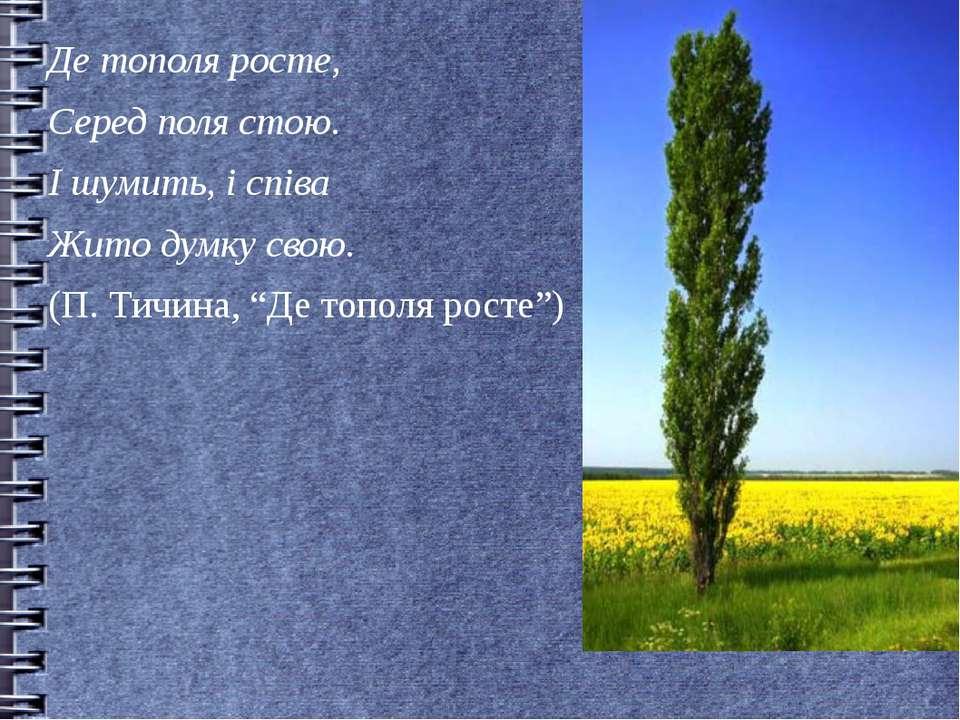 Де тополя росте, Серед поля стою. І шумить, і співа Жито думку свою. (П. Тичи...