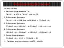 Фосфотрансляційні системи His-Asp-His-Asp 1. Автофосфорилювання ГК: ГК-His1 +...