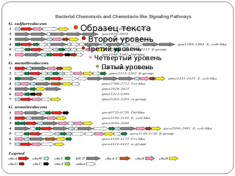 Bacterial Chemotaxis and Chemotaxis-like Signaling Pathways