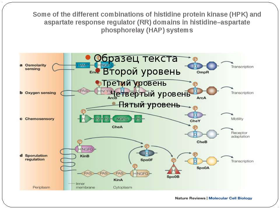Some of the different combinations of histidine protein kinase (HPK) and aspa...