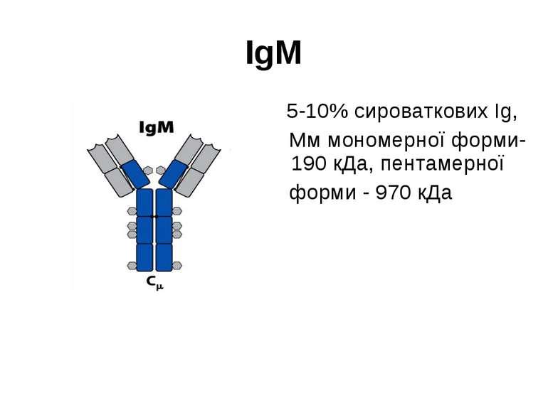 IgM 5-10% сироваткових Ig, Мм мономерної форми- 190 кДа, пентамерної форми - ...