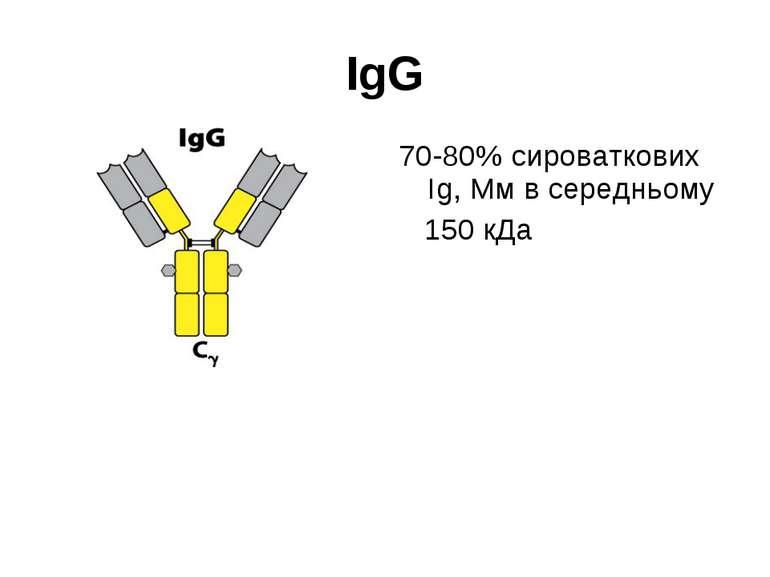 IgG 70-80% сироваткових Іg, Мм в середньому 150 кДа