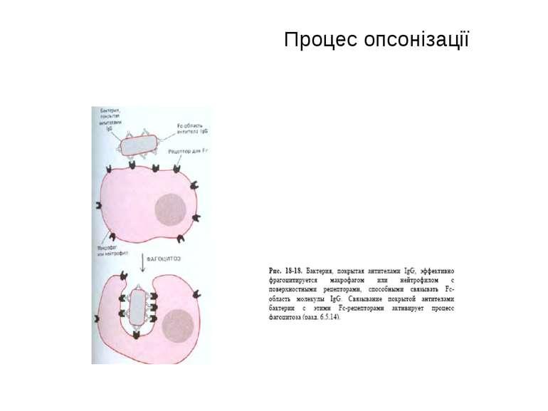 Процес опсонізації