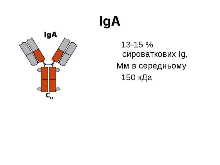 IgА 13-15 % сироваткових Іg, Мм в середньому 150 кДа