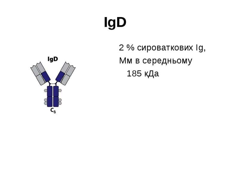 ІgD 2 % сироваткових Іg, Мм в середньому 185 кДа