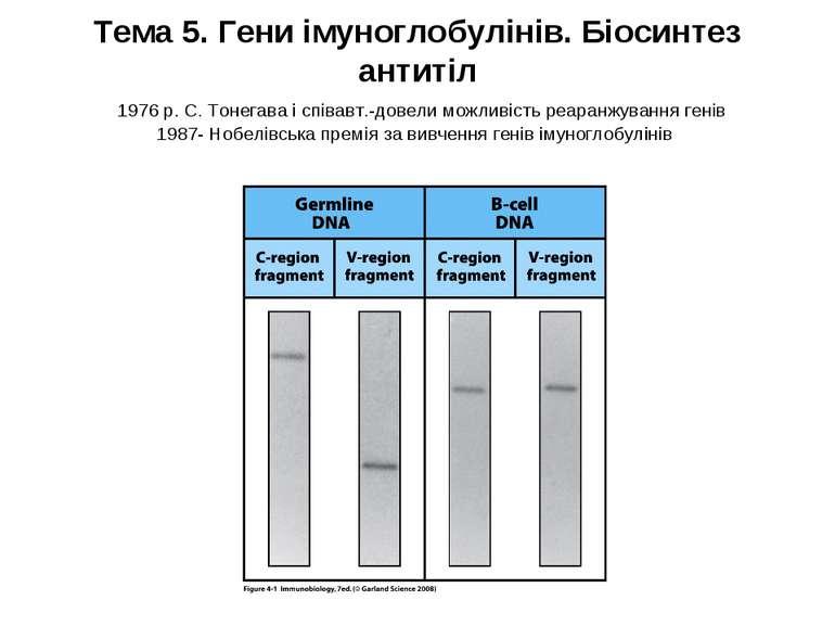 Тема 5. Гени імуноглобулінів. Біосинтез антитіл 1976 р. С. Тонегава і співавт...