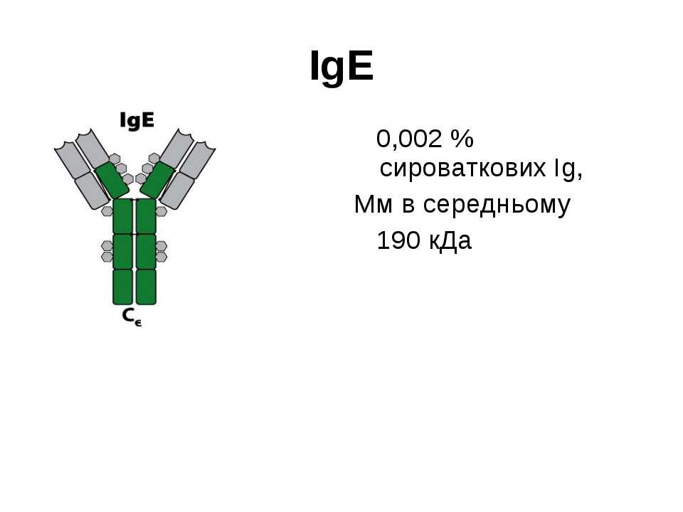 IgЕ 0,002 % сироваткових Іg, Мм в середньому 190 кДа