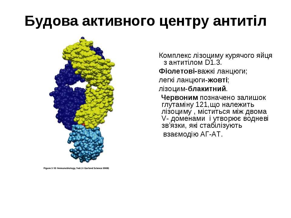 Будова активного центру антитіл Комплекс лізоциму курячого яйця з антитілом D...