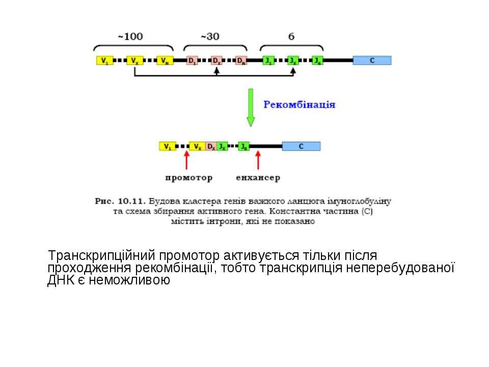 Транскрипційний промотор активується тільки після проходження рекомбінації, т...