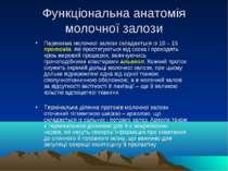 Функціональна анатомія молочної залози Паренхіма молочної залози складається ...