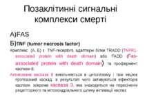 Позаклітинні сигнальні комплекси смерті А)FAS Б)TNF (tumor necrosis factor) К...